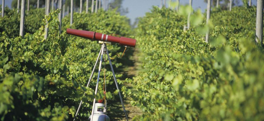 Controlling Birds In Your Vineyard – MDTgrow com