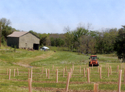 Photo courtesy of Monarch Hill Vineyards, St. Genevieve, MO